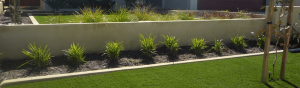 35mm Elite Grass - Wholesale artificial grass Perth for lawns