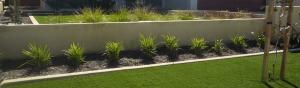 35mm Elite Grass - Wholesale artificial grass Perth for lawns