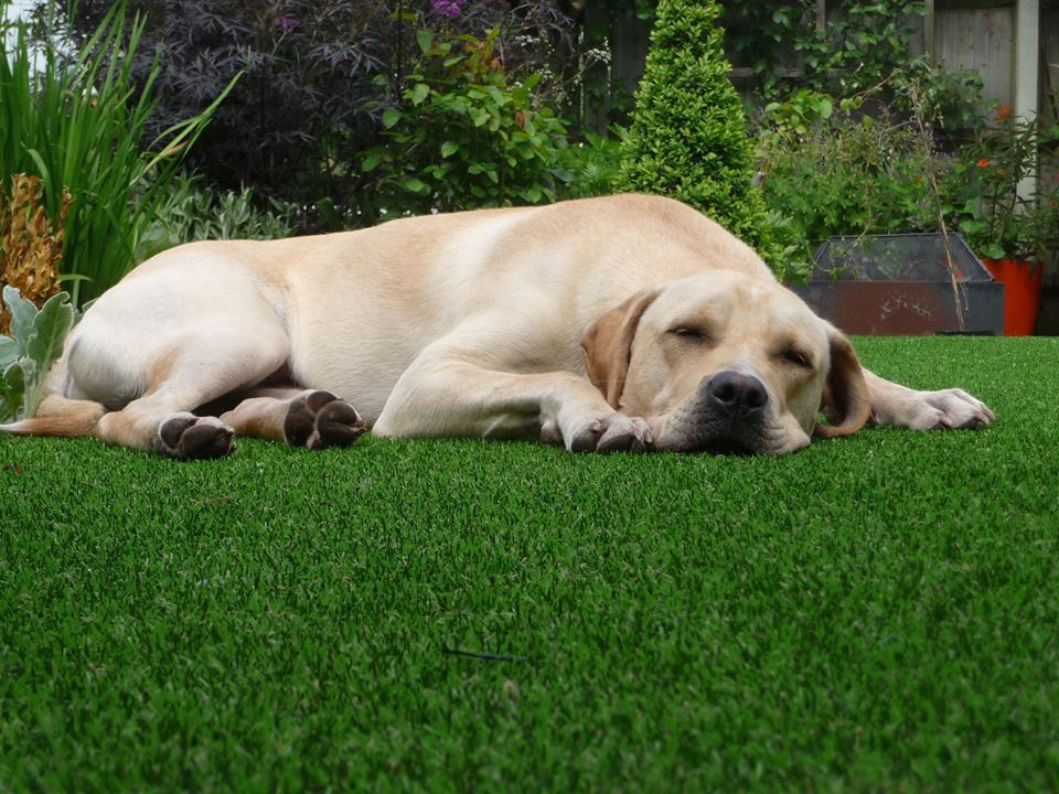 Synthetic Grass Perth for dogs